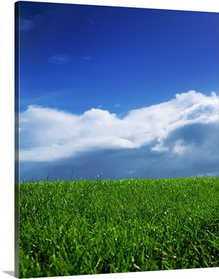 Grass In A Field, Ireland