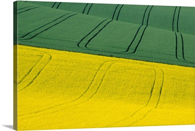 Green And Yellow Fields; Wiltshire, United Kingdom