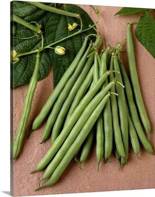 Green beans on stone, Rhapsody variet