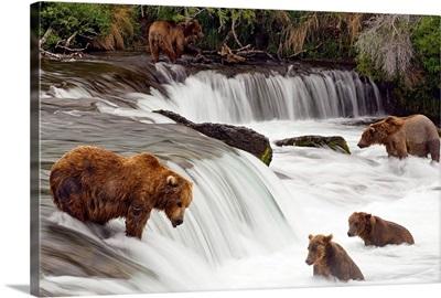 Grizzly bears fish at Brooks Falls in Katmai National Park, Alaska