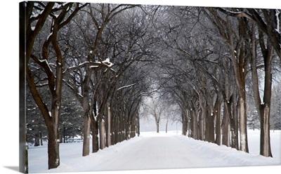 Grove Of Trees In Winter Fog, Assiniboine Park, Winnipeg, Manitoba, Canada