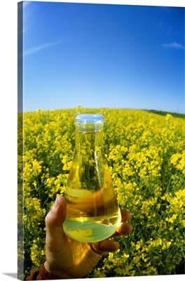 Hand holding a flask of biodiesel made from canola next to a blooming canola field