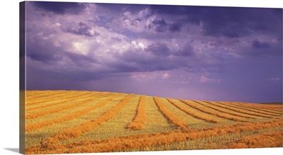 Harvested Field, Alberta, Canada