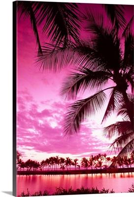 Hawaii, Big Island, Anaeho'omalu Bay, Sunset With Palm Trees