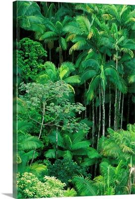Hawaii, Big Island, Hamakua Coast, Lush Rainforest Along The Coast