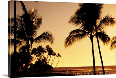 Hawaii, Big Island, Mauna Lani Resort, Ocean And Silhouetted Palm Trees At Sunset