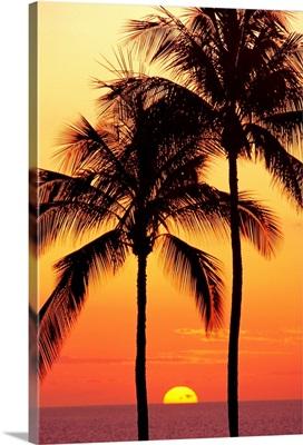 Hawaii, Big Island, Sunset With Coconut Trees On Kohala Coast