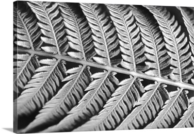 Hawaii, Extreme close-up detail of tree fern stem underside and leaves