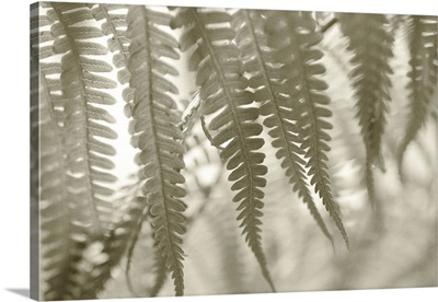 Hawaii, Extreme close-up detail of tree ferns foliage