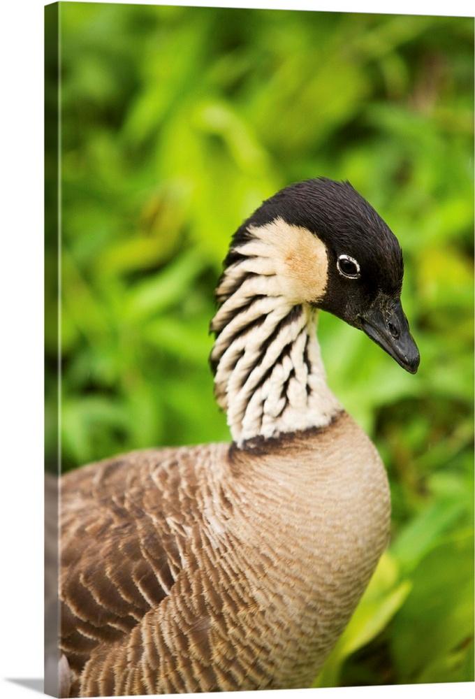 Bird Photography Office decor Home Wall decor White Duck Photo print Color Bird Photo print Waterfowl Photo print Water Bird print
