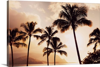 Hawaii, Kauai, Hanalei Bay, Palm Trees At Sunset