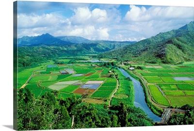 Hawaii, Kauai, Hanalei Valley Taro Fields And Wildlife Refuge