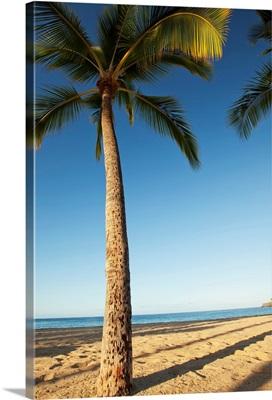 Hawaii, Lanai, Hulope Beach, Tall Palm Trees On A Beautiful Beach