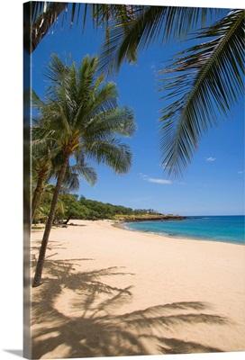 Hawaii, Lanai, Hulopoe Beach, Palm Trees And Shadows Along Sandy Beach