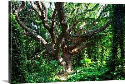 Hawaii, Maui, Honolua, A Tree Surrounded By Lush Green Vines