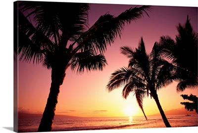 Hawaii, Maui, Ka'anapali, Sunset With Palms And Golden Reflections On Ocean
