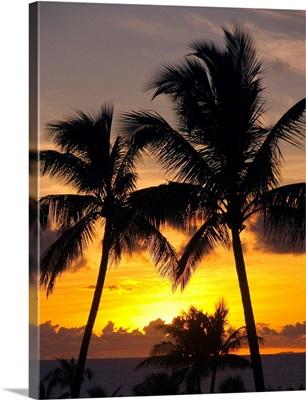 Hawaii, Maui, Kapalua, Palm Trees At Sunset
