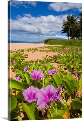 Hawaii, Maui, Kihei, Keawakapu Beach, Green Leafy Vines With Pink Flowers On Shore