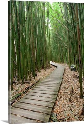 Hawaii, Maui, Kipahulu, Haleakala National Park, Bamboo Forest On The Pipiwai Trail