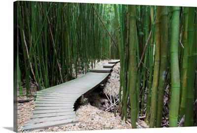 Hawaii, Maui, Kipahulu, Haleakala National Park, Trail through bamboo forest