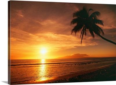 Hawaii, Maui, Olowalu, Palm Tree Silhouette At Sunset, Lanai In The Distance