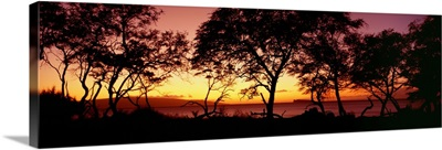 Hawaii, Maui, Trees Silhouetted On West Maui Shoreline, Molokini Island In Distance
