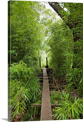 Hawaii, Maui, Waihee, A swinging Bridge into a lush green forest