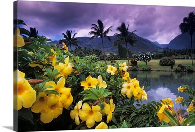 Hawaii, Maui, Yellow flowers at the Waikapu Valley Tropical Plantation