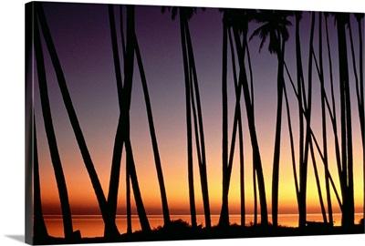 Hawaii, Molokai, Palm Grove At Sunset