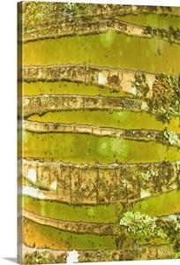 Hawaii Oahu Close Up Of Coconut Palm Tree Bark Texture Wall Art Canvas Prints Framed Prints