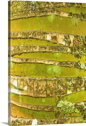 Hawaii, Oahu, Close-Up Of Coconut Palm Tree Bark Texture Wall Art ...