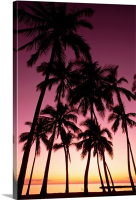 Hawaii, Oahu, Dramatic Purple Sunset Through Silhouetted Palm Trees, Ocean