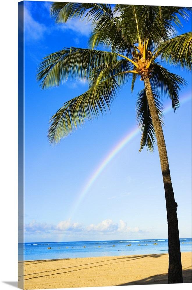 Hawaii Oahu Honolulu Ala Moana Beach Park Palm Tree