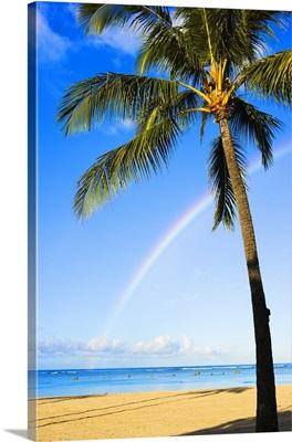 Hawaii, Oahu, Honolulu, Ala Moana Beach Park, Palm Tree And Rainbow