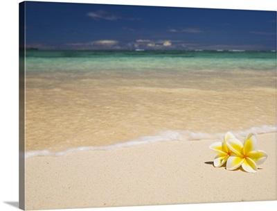 Hawaii, Oahu, Lanikai Beach, Two Plumerias Resting On The Sand