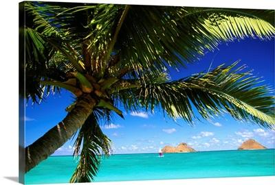 Hawaii, Oahu, Lanikai, Palm Tree Foreground