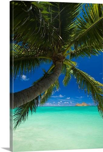 Na Mokulua Hawaii: Hawaii, Oahu, Lanikai, Palm Tree Over Turquoise Ocean, Na