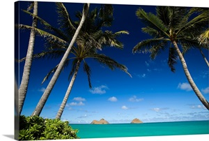 Hawaii Oahu Lanikai Palm Tree Over Turquoise Ocean Na Mokulua In The Distance Wall