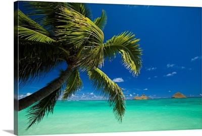 Hawaii, Oahu, Lanikai, Palm Tree Over Turquoise Ocean, Na Mokulua In The Distance