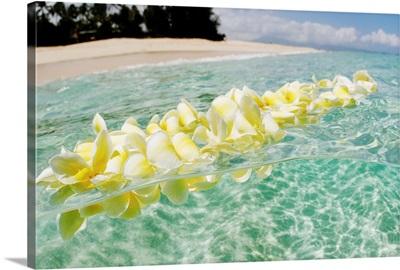 Hawaii, Oahu, North Shore, Plumeria Lei Floating In Crystal Clear Ocean