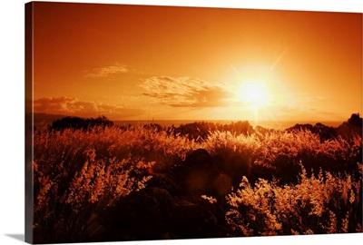 Hawaii, Oahu, North Shore, Sunset Lighting The Landscape