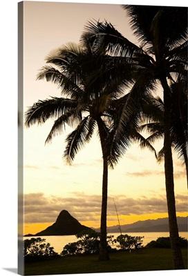 Hawaii, Oahu, Silhouette Of Palm Tree And Chinaman's Hat