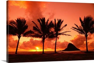Hawaii, Oahu, Sunrise At Chinaman's Hat, Palms Silhouetted