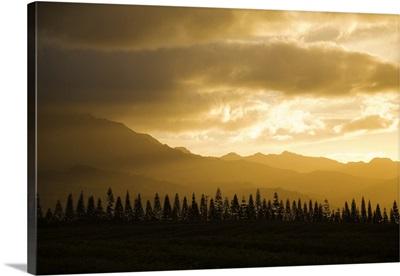 Hawaii, Oahu, Waianae, West Oahu, Pine Trees And The Kaala Mountain Range At Sunset