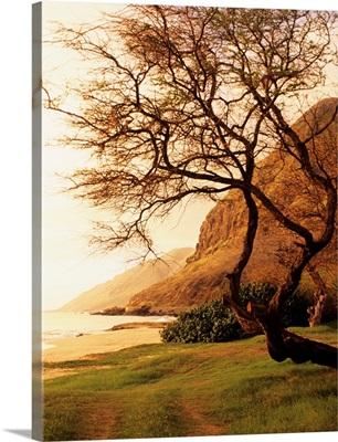 Hawaii, Oahu, West Shore, Yokohama Bay Area At Sunset, Tree On Grassy Area