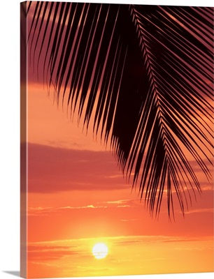 Hawaii, Silhouette Of Palm Frond Against Orange Sunset