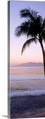 Hawaii, West Maui Beach At Twilight, Palm Tree Along Shoreline