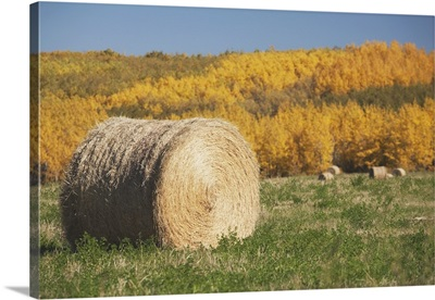 Hay Bale With Autumn Colors, Alberta, Canada