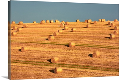 Hay Bales After Harvest, Mallow, County Cork, Ireland