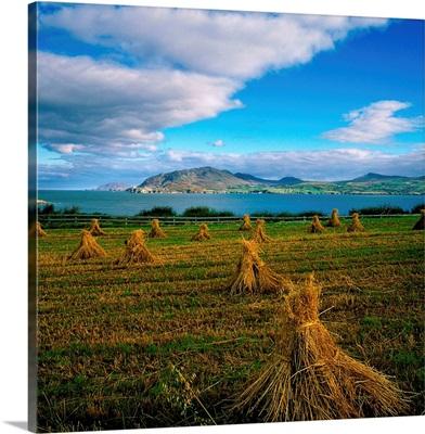 Hay Bales In A Field, Ireland